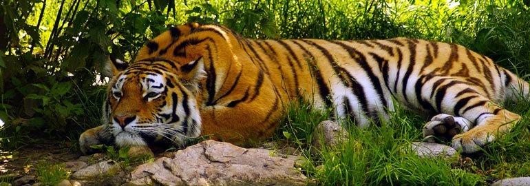 Η προσωπικότητα της Τίγρης