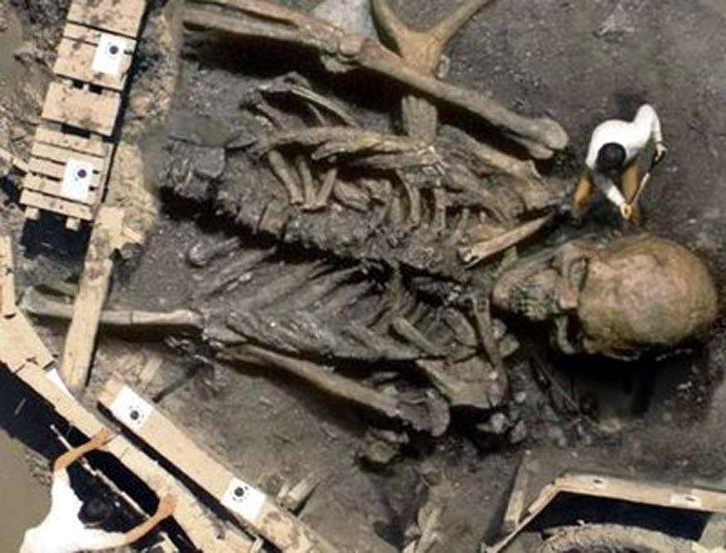 σκελετος 3,5 μέτρα